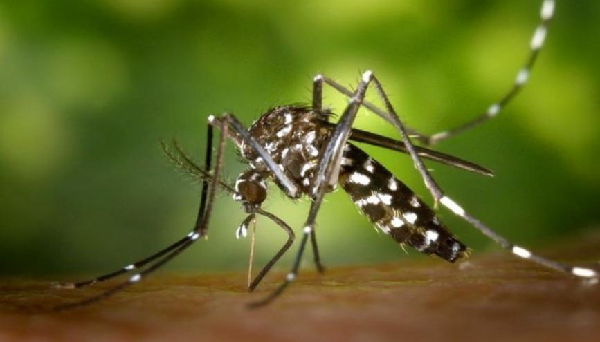 Tizi-Ouzou : enquête épidémiologique suite à la découverte d'un spécimen de moustique-tigre